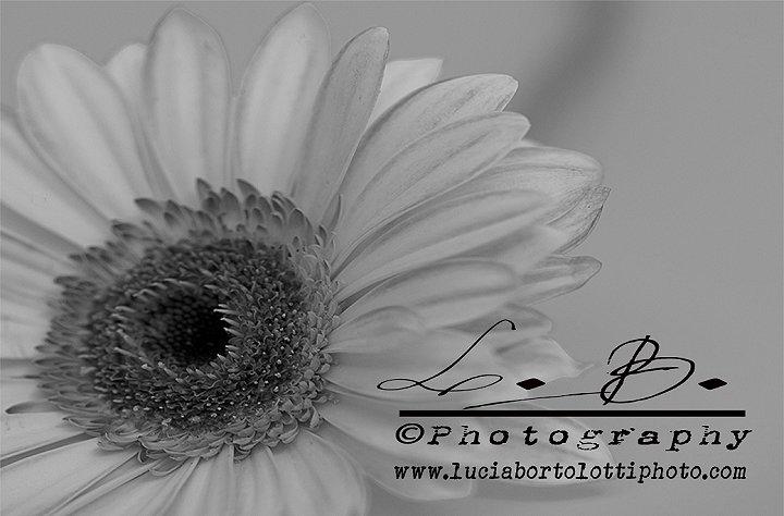 Lucia Bortolotti Home Page