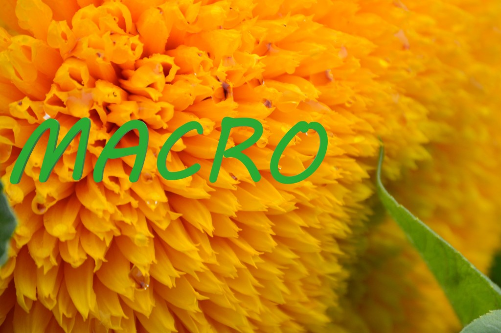 macro image